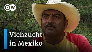 Mexiko: Artenschutz durch nachhaltige Tierhaltung | Global Ideas
