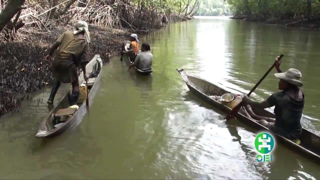La piangua de los manglares del cuerval timbiqui cauca for Big 5 fishing license