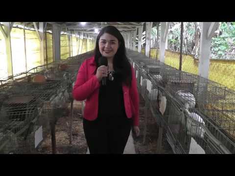 AgroAgora - Cunicultura na Fazenda Angolana em São Roque