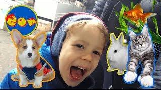 Покупаем домашних питомцев Птичий рынок Киев щенки котята попугаи кролики рыбки
