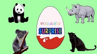 Киндер Сюрпризы и дикие животные. Грузовик везет сюрпризы.  Мультик