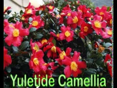 Top 10 Flowering Shrubs Youtube
