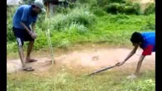 api nodanna cricket (suapu) Thumbnail