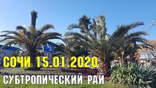 Сочи: 15 января 2020 года | Субтропический рай в отдельно взятом городе