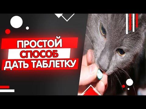 Как скормить коту таблетку от глистов видео