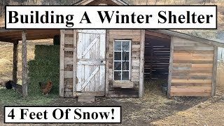 #381 - Building A Winter Shelter For Animals (4' of Snow)