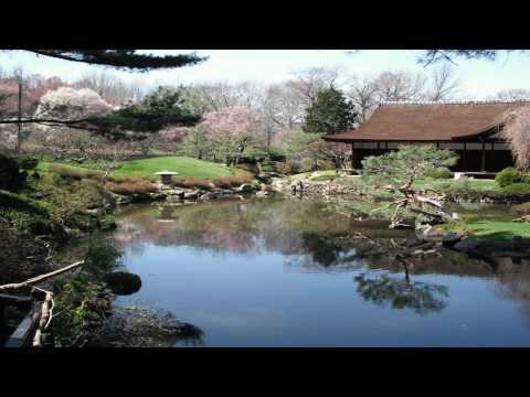 Cherry blossom video.wmv