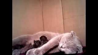 Наша кошка, родила котят немножко