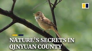 Shanxi's hidden gem: Qinyan County