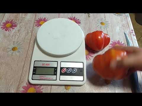 Дегустация : томат эм-чемпион