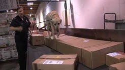 Detector Dogs Stop Plant Pests
