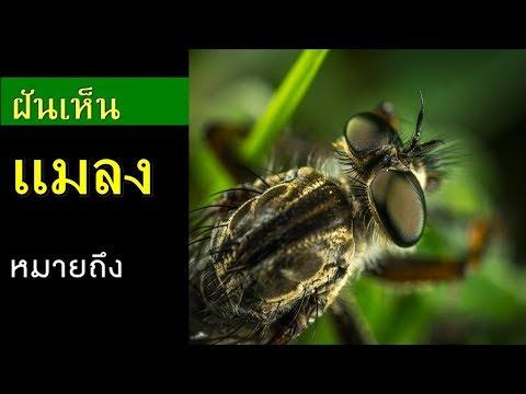 ทำนายฝัน - ฝันเห็นแมลง [พร้อมเลขเด็ด]
