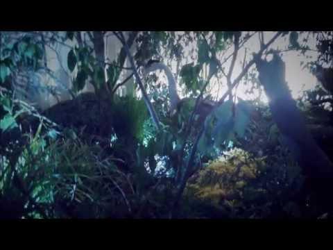Container Landrecies : Forêt de Mormal