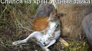 Выставка в Бричанах экзотических птиц  кроликов и.т.д 2016