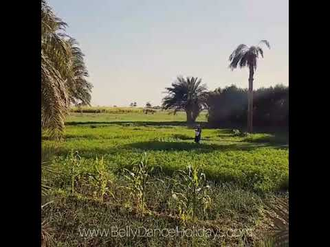 Travelling around Egypt: relaxing farming at the land of the Pharaohs Luxor