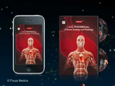 Junior Animated Atlas of Human Anatomy and Physiology - YouTube