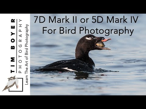 7dm2 Or 5dm4 For Bird Photography 2018