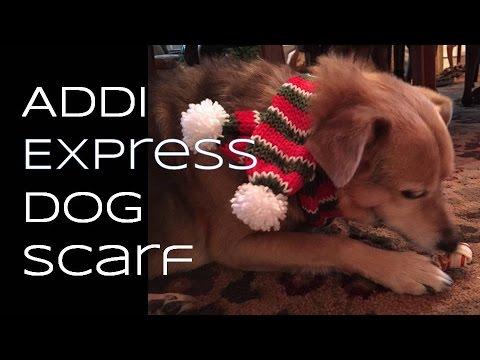 028152fadf5 Addi Express Dog Scarf Tutorial - YouTube