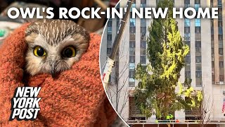 Adorable owl found tucked inside Rockefeller Christmas tree | New York Post