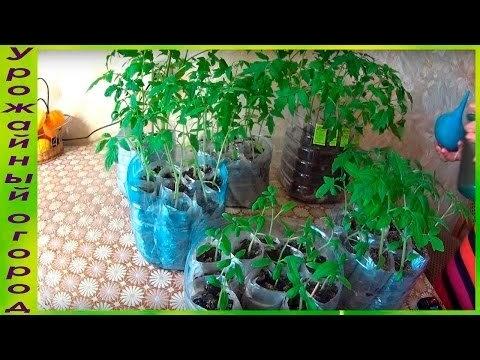 Вопрос: Какие существуют современные способы выращивания рассады без грунта?