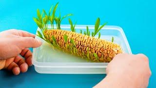 在家種蔬菜和水果沒有菜圃也可以唷