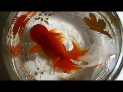 Goldfish And Bowls