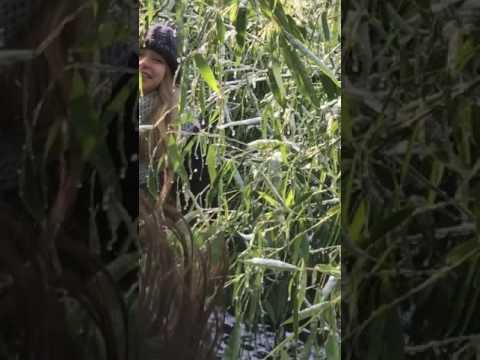 Bamboo creatures