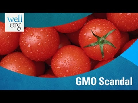 GMO Scandal: Why You Should Avoid Genetically Modified Food | Well.Org