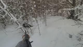 Охота на кабана с подхода. Январь 2019