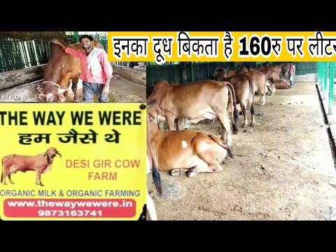 THE WAY WE WERE Gir Cow Farm Delhi NCR Noida