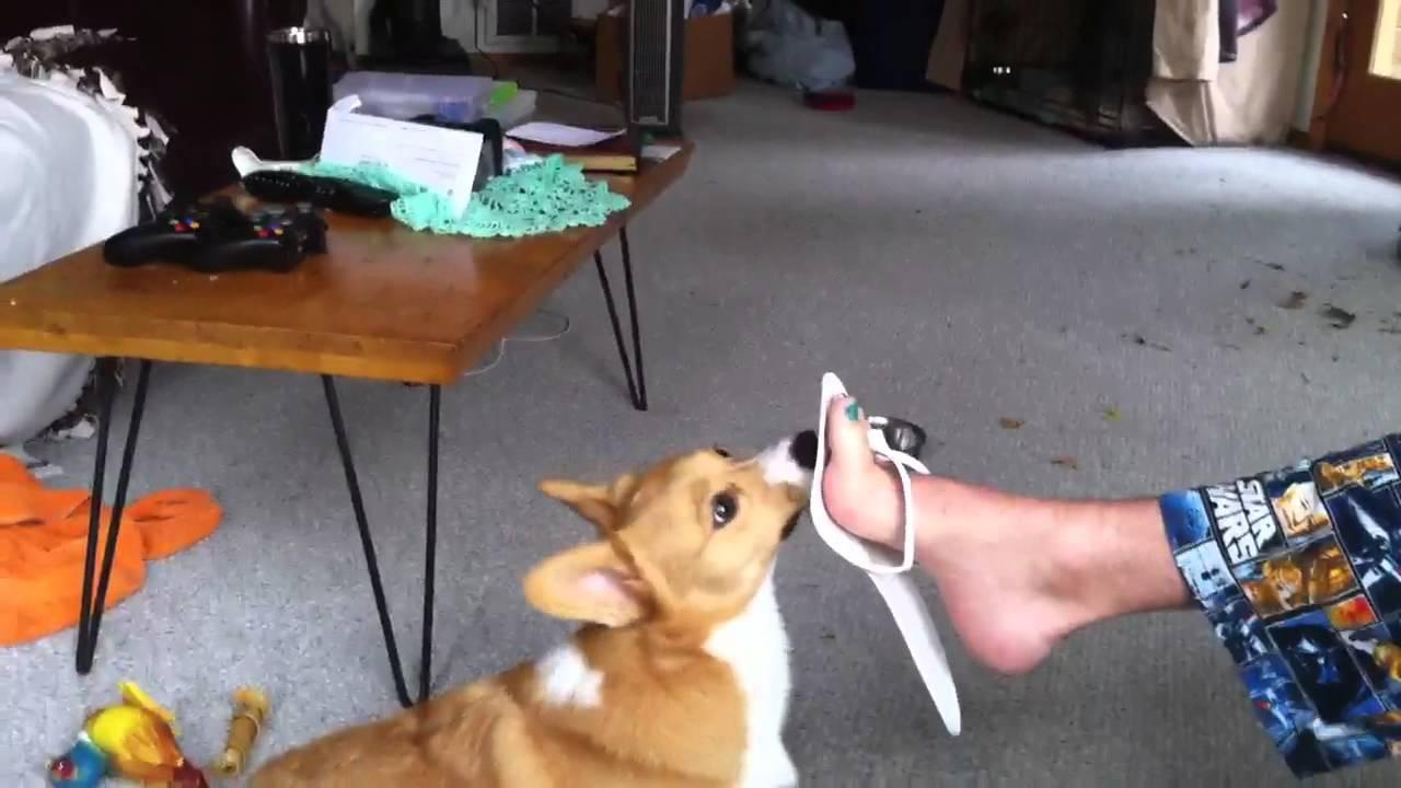 Samus Feet Tickle: Samus Plays With Feets
