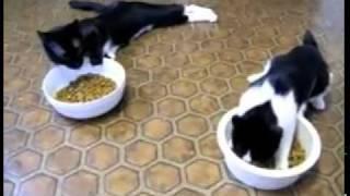 Коты после наркоза