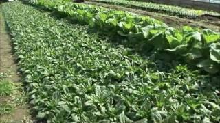 곰보배추농장