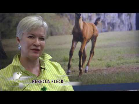 Advice from Arabian Horse Breeders
