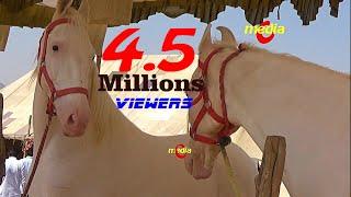 पुष्कर मेले में लाखों के घोड़े : Horse for Sale : Pushkar Mela || Badal 2017