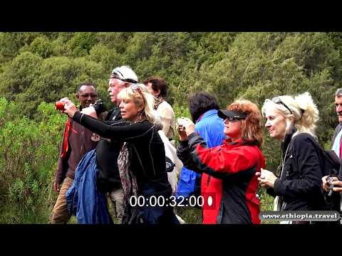 Ethiopia - Tourists Bale National Park
