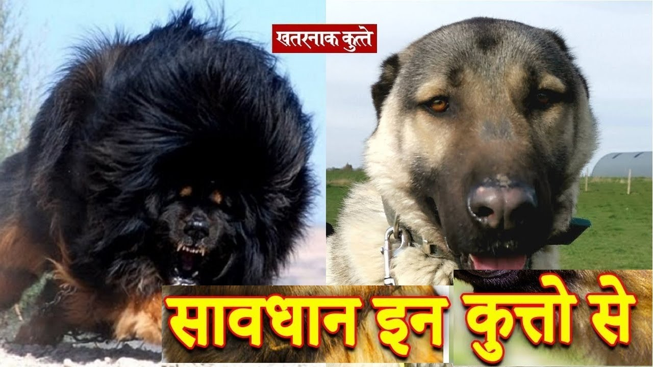 दुनिया के  सबसे खूंखार कुत्ते  MOST Dangerous Dog Breeds Scoop of the Day