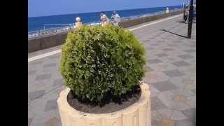 Адлер   Краснодарский край, море, пляж, цветочки(, 2015-07-18T21:10:47.000Z)