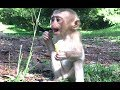 Food got stuck in baby monkey's throat when lovely monkey is hungry and eating very fast
