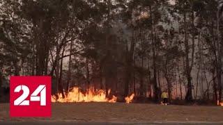 австралия подсчитывает ущерб от лесных пожаров - Россия 24