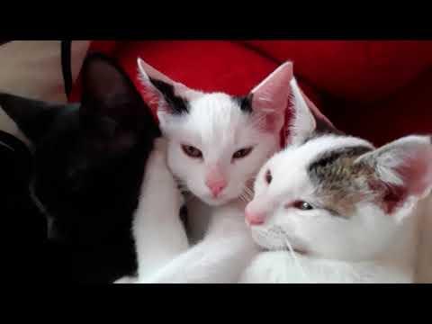 Three purring little cute cats