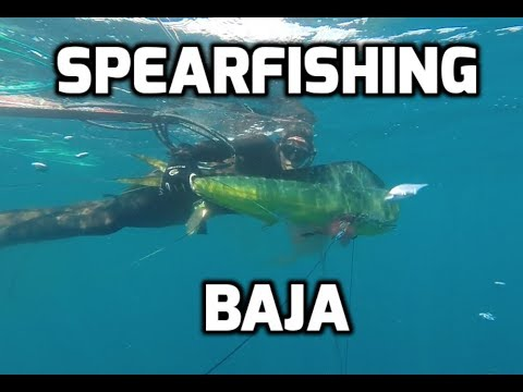 NorCal Underwater Hunters Spearfishing trip to Baja