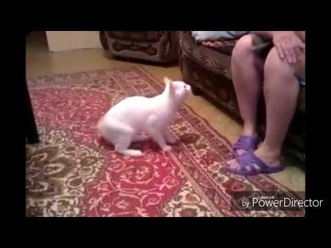 Cats playing top fine video