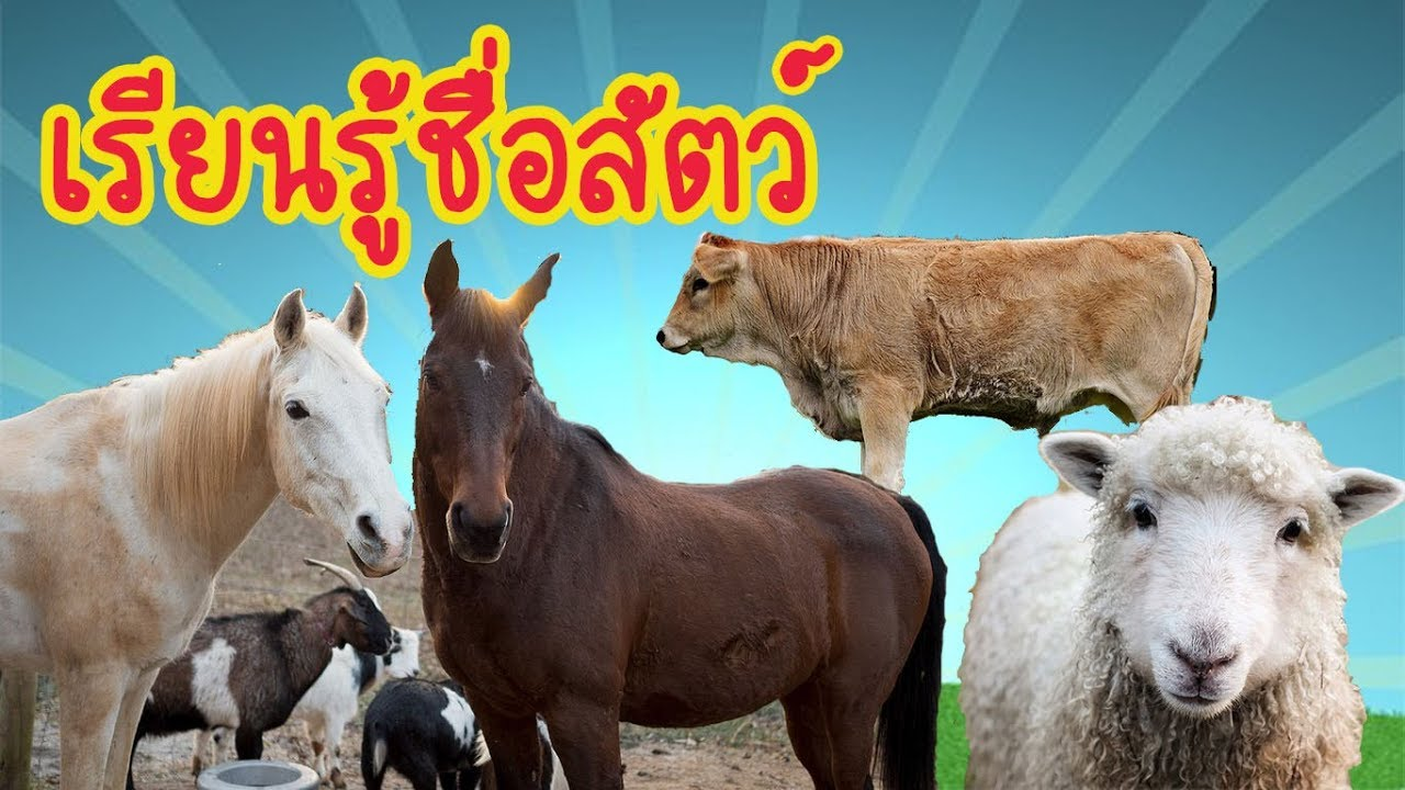 Learning about farm animals เรียนรู้ชื่อสัตว์ สำหรับเด็ก ,สื่อการสอน สัตว์เลี้ยง  l