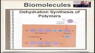 Chapter 2B Part 3 - Dehydration Synthesis & Hydrolysis