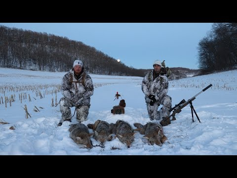 Coyote Hunting 5 Pack Amazing Footage