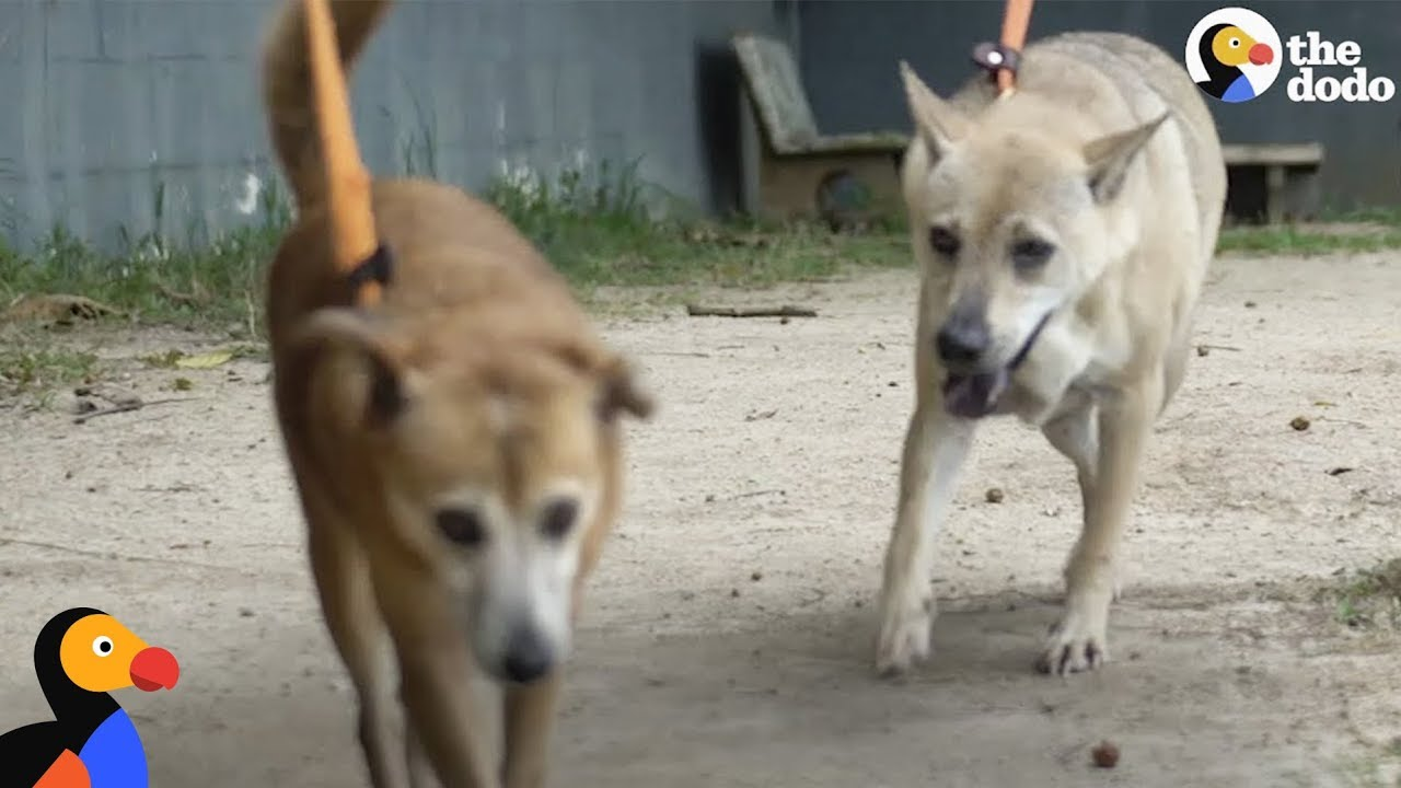 Dog Won't Leave Girlfriend Behind at Shelter, So Family Adopts Both of Them