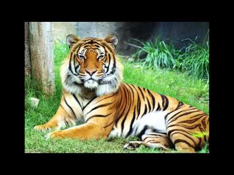 1 số loài động vật sống trên cạn