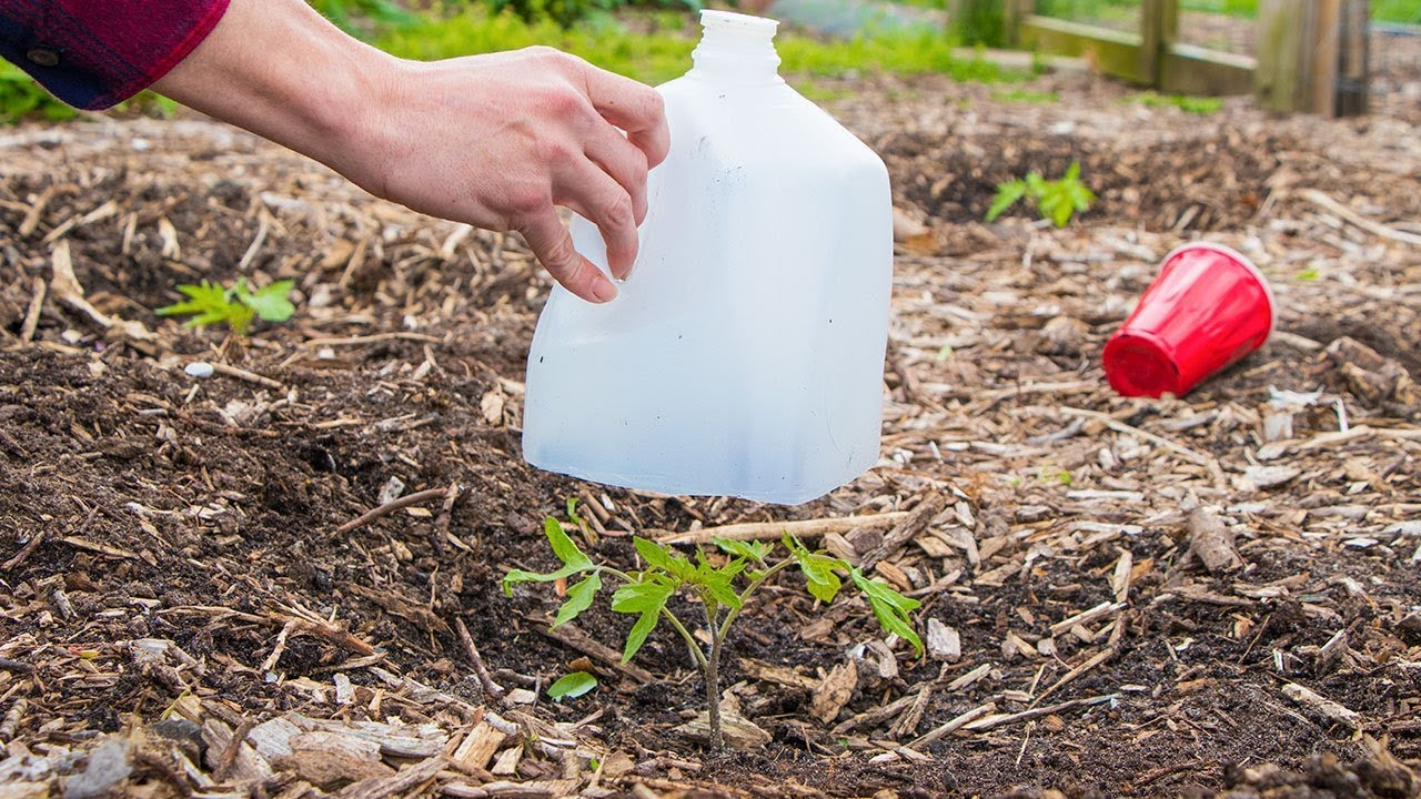 Download 5 Biggest Mistakes When Growing Seedlings and Transplanting into the Garden