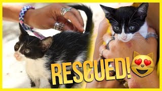 I Rescued a Kitten in Mexico! 😻